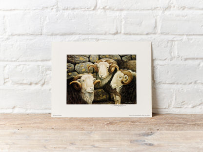 Sheep Print by Oxenham Art Gallery