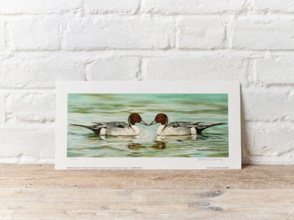 Pintails painting