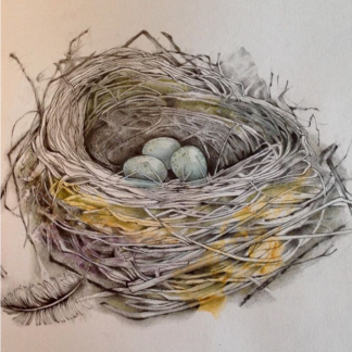 Bird's Nest Painting by Margaret Taylor