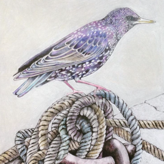 West Bay Starling Painting by Margaret Taylor